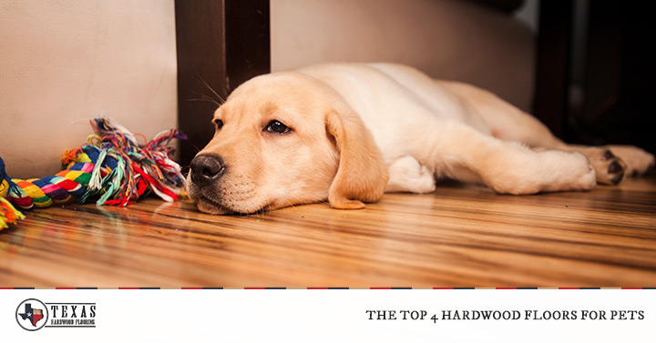 The Top 4 Hardwood Floors for Pets