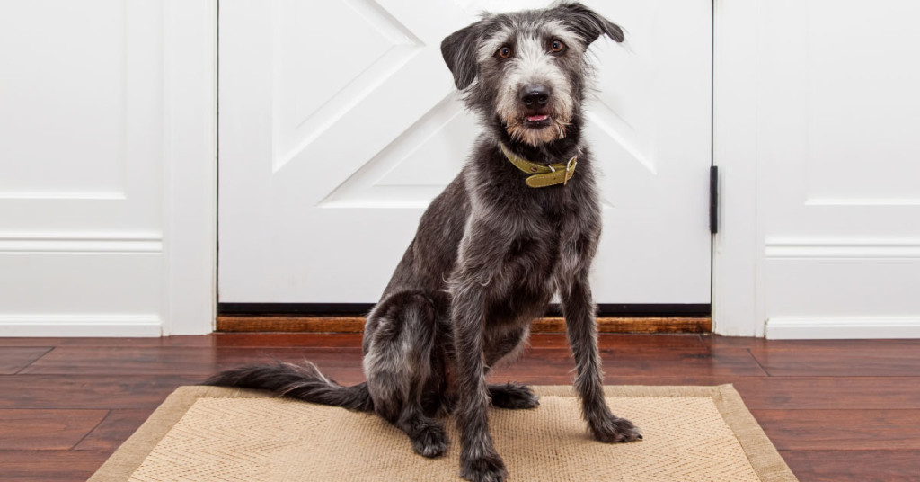 Furry Friends and Your Hardwood Floor in Dallas